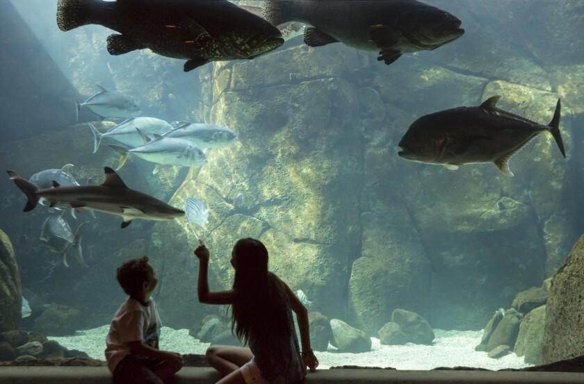 The Waikiki Aquarium in Honolulu