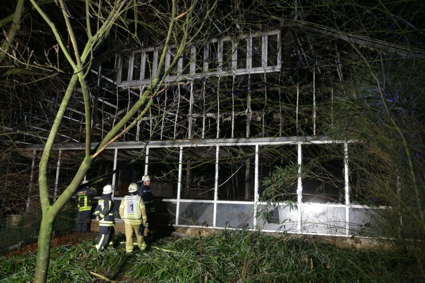 Firefighters get a close look at a charred building that served as an ape house at a zoo in Krefeld, Germany, on Wednesday.