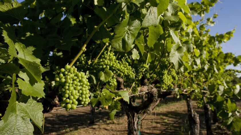 The U.S. exported $1.5 billion in wine last year, 97% of it from California.