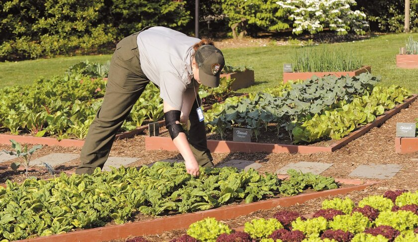 Tips For Big Yield In A Small Garden The San Diego Union Tribune