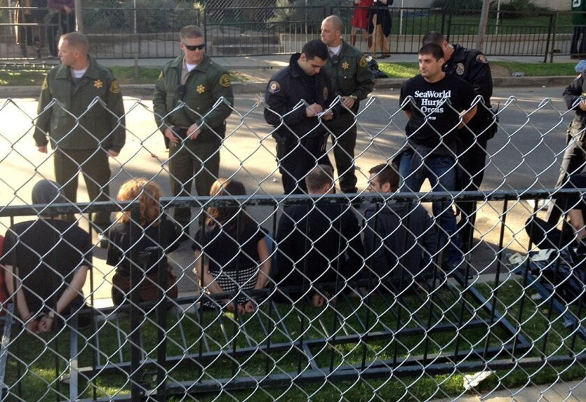 A man who PETA claims is a SeaWorld employee who posed as an animal rights activist (standing at right), is being arrested during a protest of a SeaWorld float that was featured in the 2014 Rose Parade.