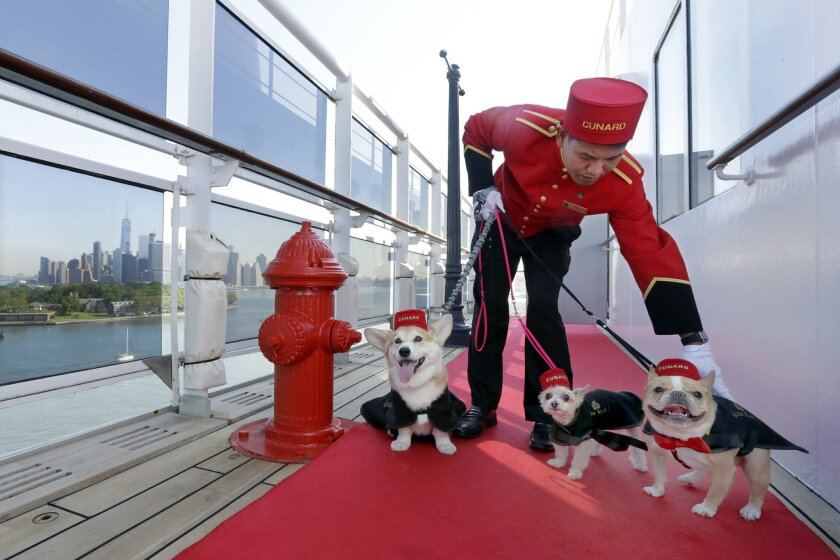 Kennel Master Oliver Cruz tends to celebrity dogs Wally, from left, Ella and Chloe outside the kennel aboard the ocean liner Queen Mary 2, docked at her homeport at the Brooklyn Cruise Terminal in New York, Wednesday, July 6, 2016. The Cunard ship underwent $132-million of renovations that includes