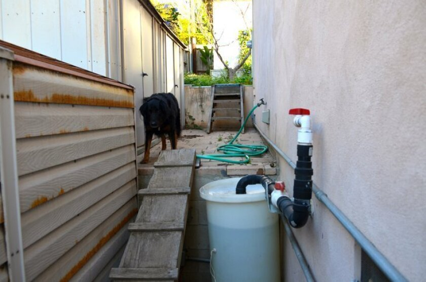 At an Encinitas home, a tank collects graywater that's diverted to irrigate the yard. Encinitas is encouraging graywater systems.