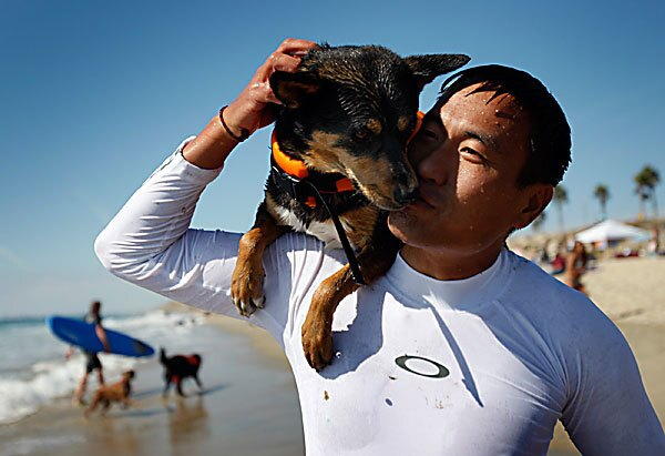 PHOTOS: How about those dogs surfing in Surf City?