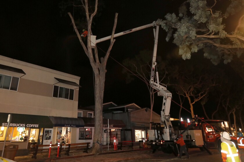 Three condemned Balboa Island trees are spared the saw, at least for now