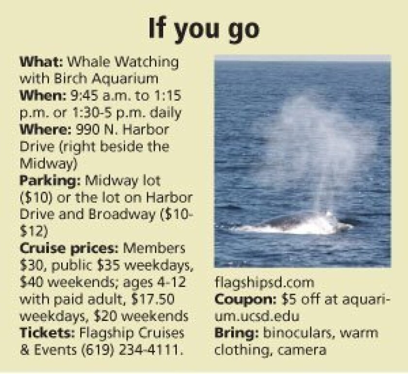 whalewatching