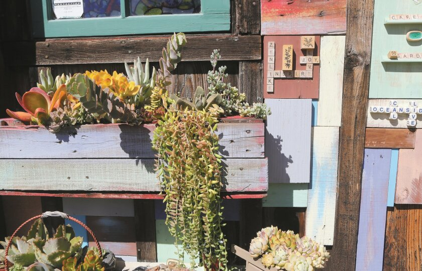Succulents and repurposed materials combine to create the décor of one of the cafe's walls.