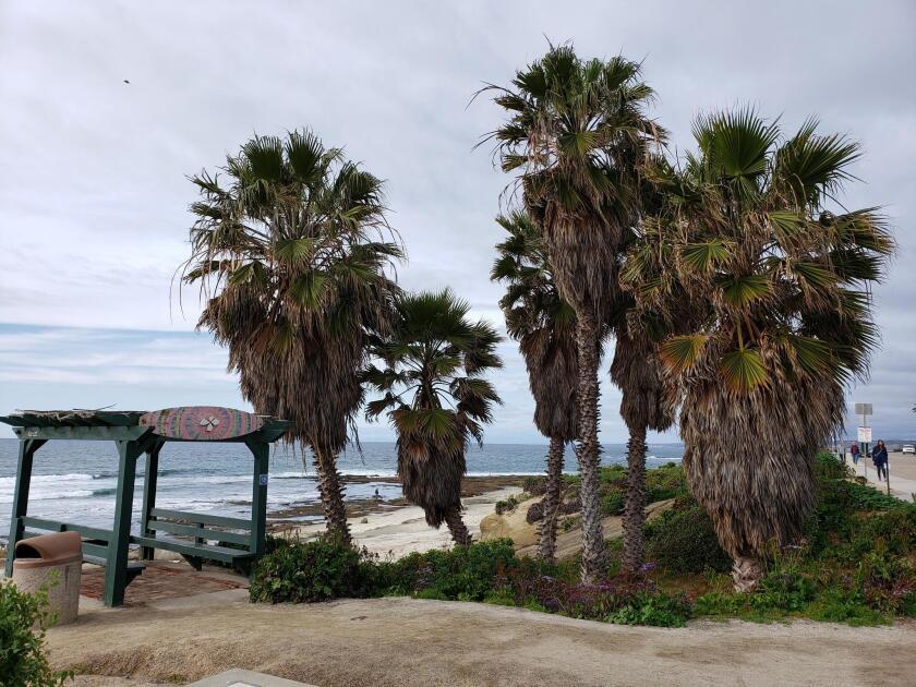 The overgrown palm trees on the coastline near 333 Coast Blvd.