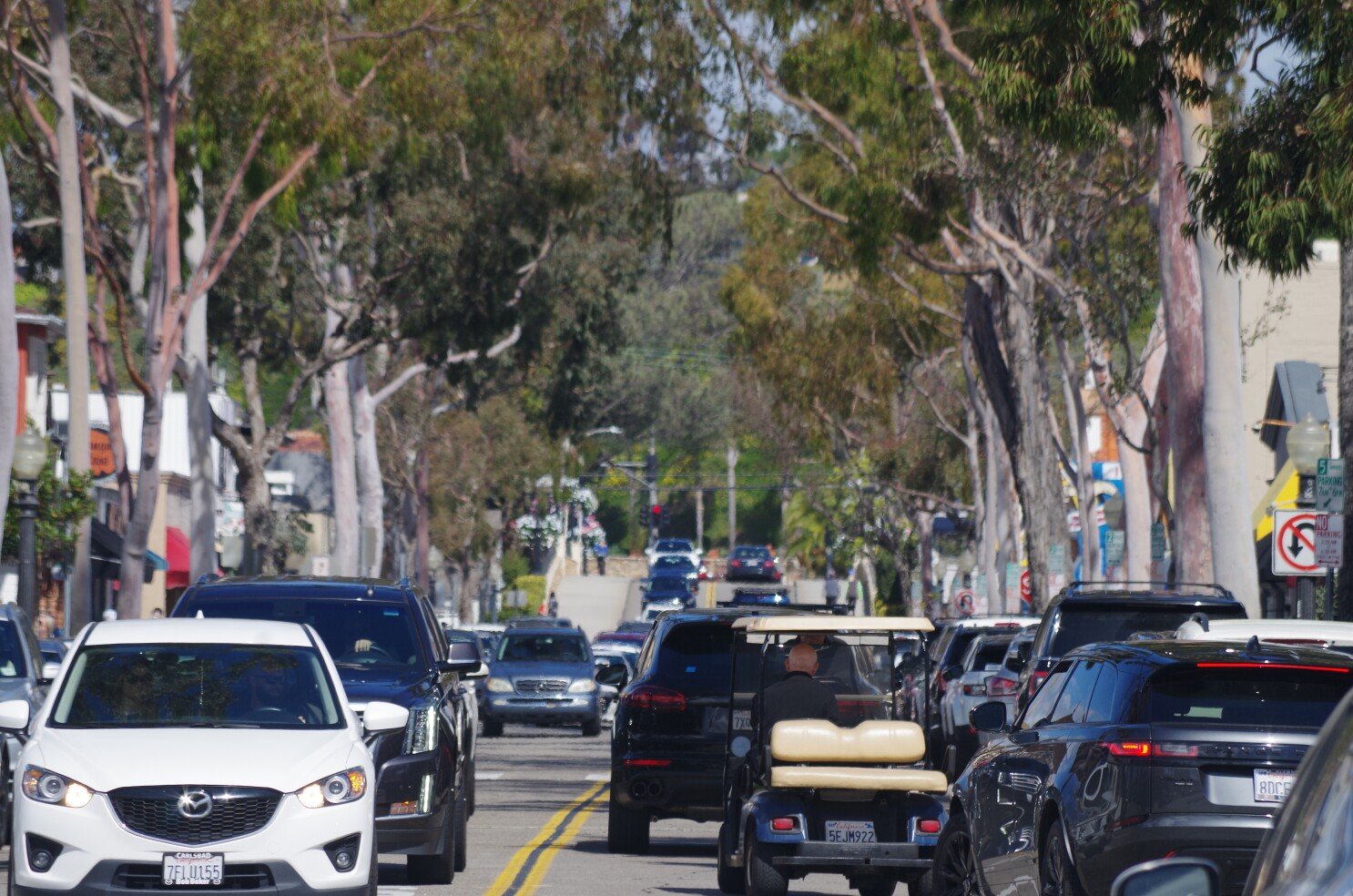 10 Balboa Island trees should be removed within a year, Newport Beach arborist says, though residents object