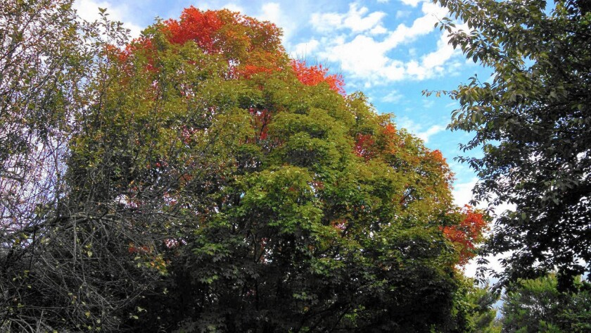 Autumn comes to Gaithersburg, Md.