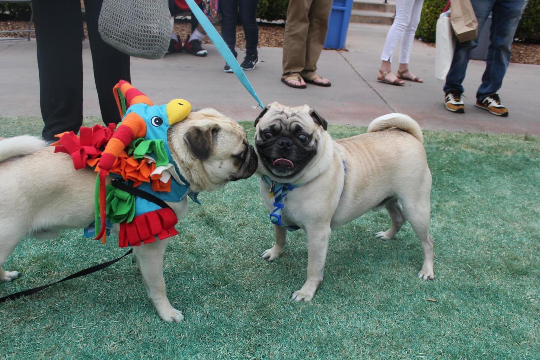 A pinata pug makes a friend