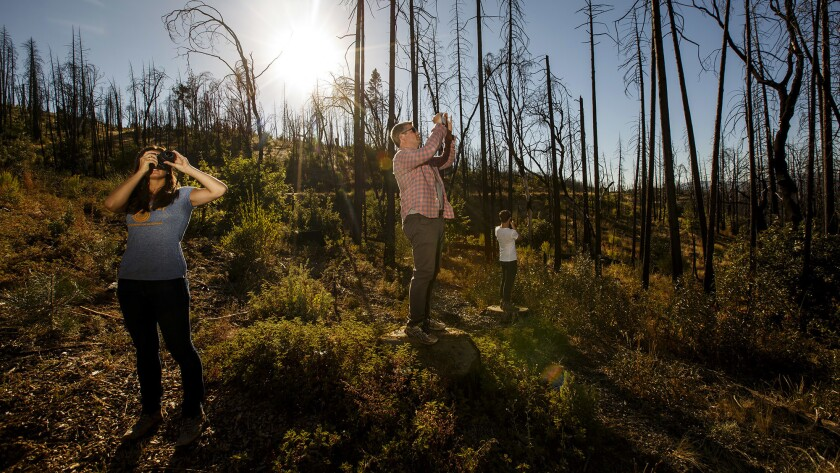 Can a new type of bond fix California's wildfire and water problems? A S.F. start-up is betting it can.