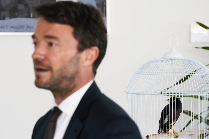 French Ambassador to the United Arab Emirates, Xavier Chatel, speaks to The Associated Press as Juji, a rescued yellow-beaked mynah carried into the United Arab Emirates by a fleeing Afghan refugee, sits in a cage, in Abu Dhabi, United Arab Emirates, Sunday, Oct. 10, 2021. The small bird rescued from Kabul by Chatel during France's frantic evacuations has touched a global nerve, providing an uplifting counterpoint to the crises afflicting Afghanistan amid the Taliban takeover (AP Photo/Jon Gambrell)