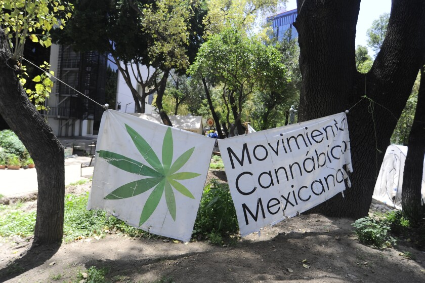 A camp outside Mexico's Senate building, where activists have grown a crop of marijuana plants.
