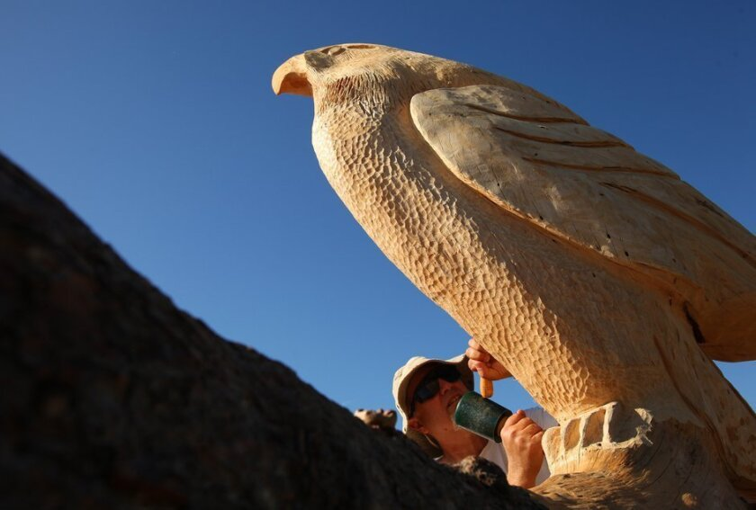 Tim Richards carved a bench with an attached red-tailed hawk out of a dead Torrey Pines tree.
