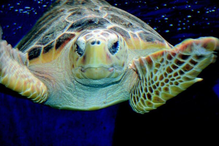 best_bet.turtle