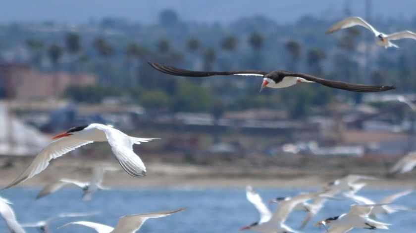 birding on the bay.jpg