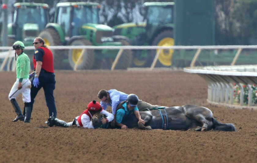 July 15, 2016, Del Mar, California, USA_| After the sixth race jockey Brandon Boulanger walks away from horse Presidential Air after it went down before the finish. Presidential Air was euthanized after race officials determined the filly had a broken leg.|_Mandatory Photo Credit: Photo by Charlie Neuman/San Diego Union-Tribune/©2016 San Diego Union-Tribune, LLC