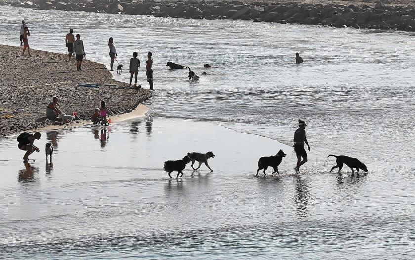 tn-2447113-tn-dpt-me-dog-beach-survey-1-jpg-20160115