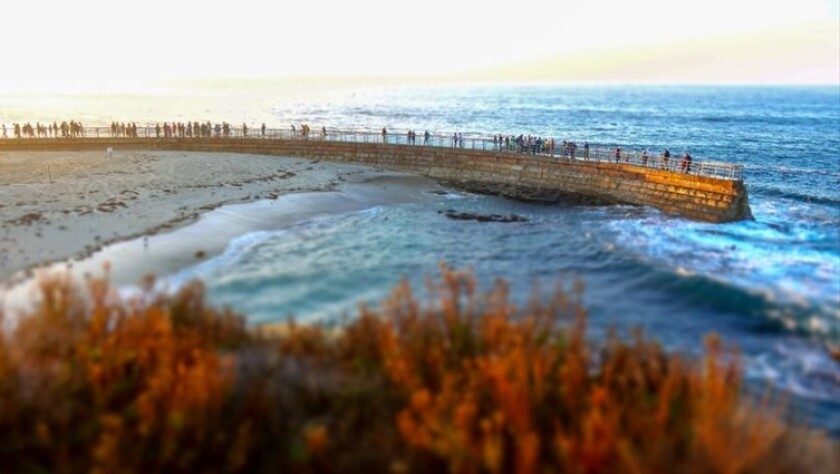 La Jolla Community Planning Association voted to send a letter to the City asking that it explore opening the now-plugged holes in the seawall as a way to clean Children's Pool.