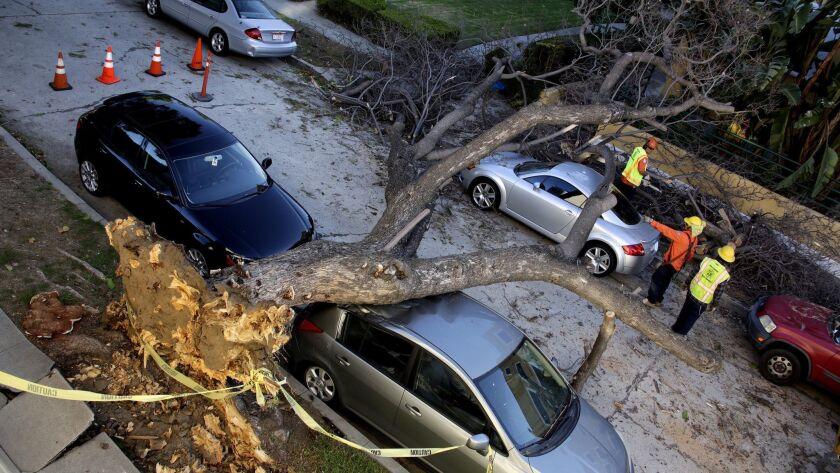 LOS FELIZ, CA-OCTOBER 29, 2015: City of Los Angeles public works crew prepare to remove a tree that