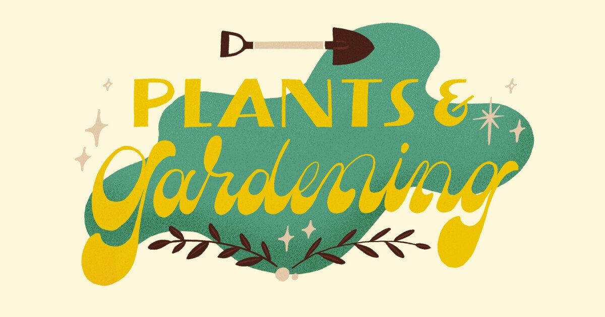 The plant person's guide to the best holiday gifts