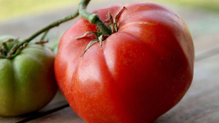 Madame Marmande tomatoes are a favorite.