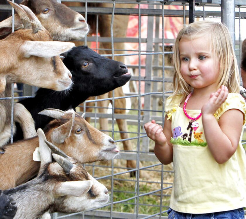Should human interaction with livestock animals at petting zoos and fairs -- such as at the state fair of Virginia, shown here -- be banned to prevent the spread of disease?