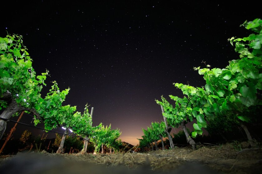 The night sky over the vines at Adobe Guadalupe, which produces 8,000 cases of wine a year.