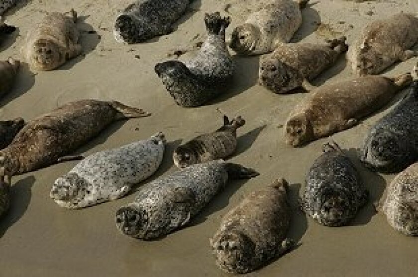 A state Assembly panel has affirmed a fast track for a measure that would give  the San Diego City Council more authority on the fate of seals at Children's  Pool beach.