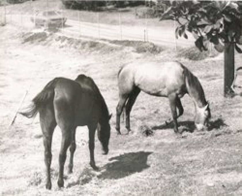 In its early days, Interstate 5 was nothing but a dirt road that ran behind the Rancho Coastal Humane Society, located at 389 Requeza St. in Encinitas. Courtesy photo