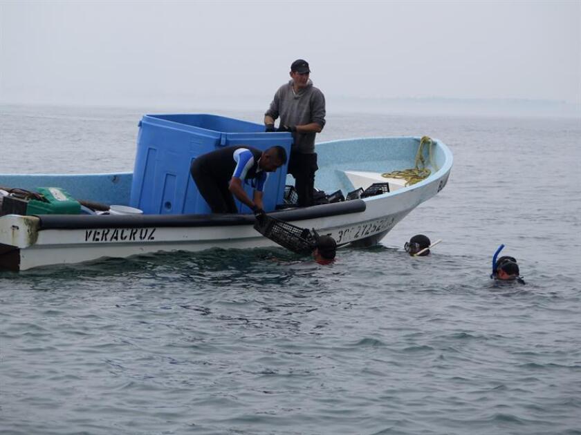Fotografía del 13 de marzo de 2018, cedida por la asociación Acreditado Ambiental, muestra a un grupo de pescadores trabajando en la recolección de arrecifes en costas de Veracruz (México). EFE/ACREDITADO AMBIENTAL/SOLO USO EDITORIAL/NO VENTAS