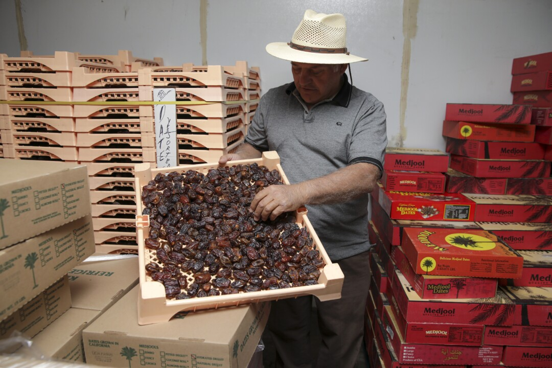 Ahmad Fejleh holds medjool dates from his date farm in Westmorland.