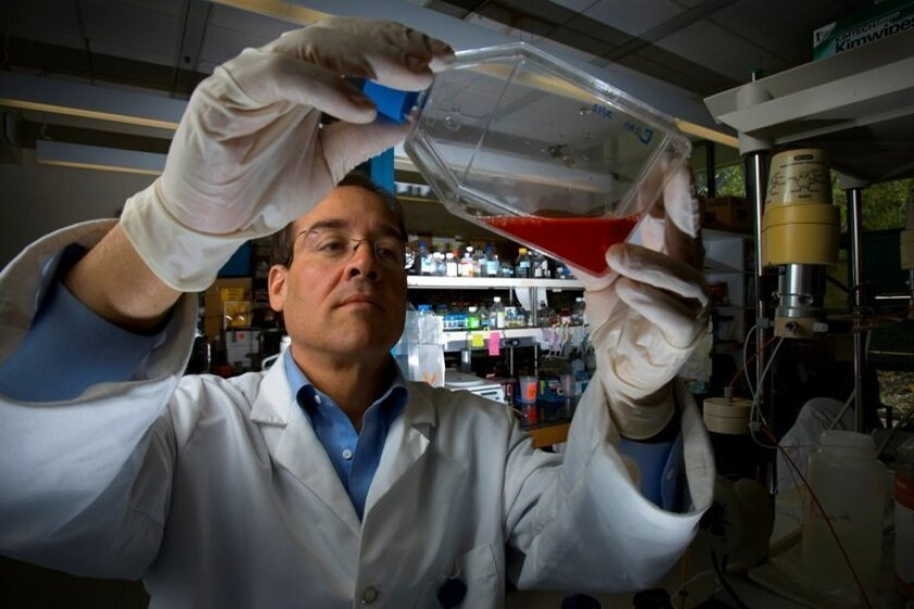 At his research lab on the UCSD campus, Joseph Vinetz examines a malaria parasite culture. Vinetz is a malaria researcher at UCSD.