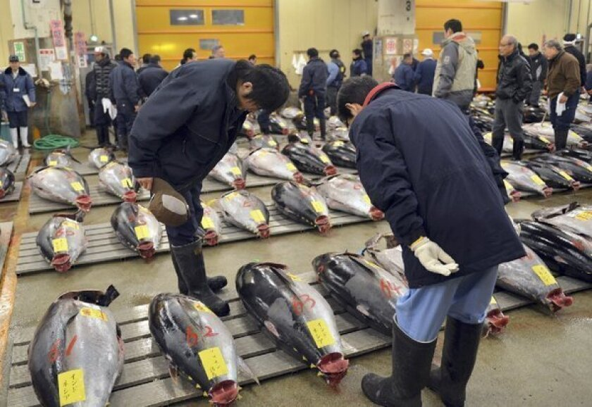 Bluefin tuna fetch huge prices at fish markets like this one, in Tokyo, Japan. Radiation from the Fukushima nuclear accident has been detected in bluefin tuna off California shores, but scientists say eating the fish poses very little risk.
