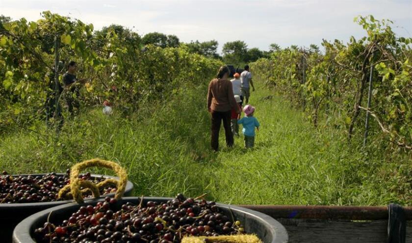El Senado aprobó una medida del representante Urayoán Hernández, que busca incluir a los agricultores bonafide, cuyos negocios cuenten con 15 empleados o menos, dentro de la jurisdicción de la Oficina del Procurador de Pequeños Negocios. EFE/ARCHIVO