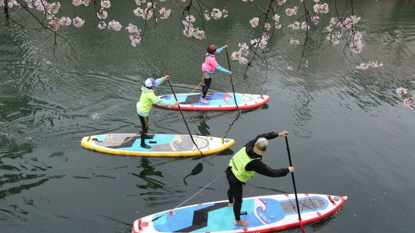 Visitors enjoy stand-up paddleboarding near the blooming cherry blossoms along the Oka River in Yoko