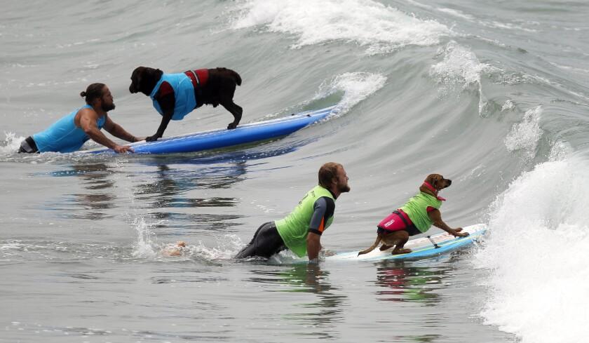 2017 Imperial Beach Surf Dog