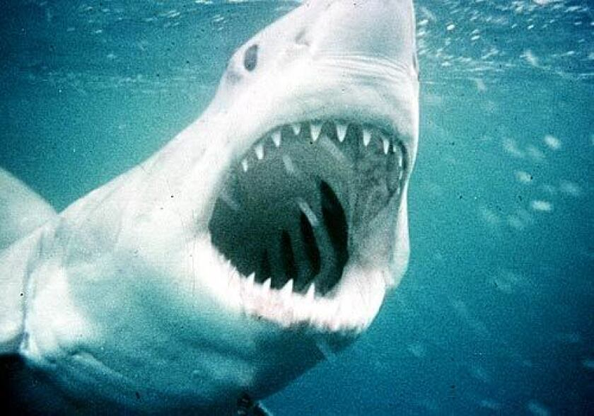 """In the movie """"Jaws,"""" local officials were reluctant to shut down beaches because of the potential economic hit. Today's coronavirus pandemic has parallels."""