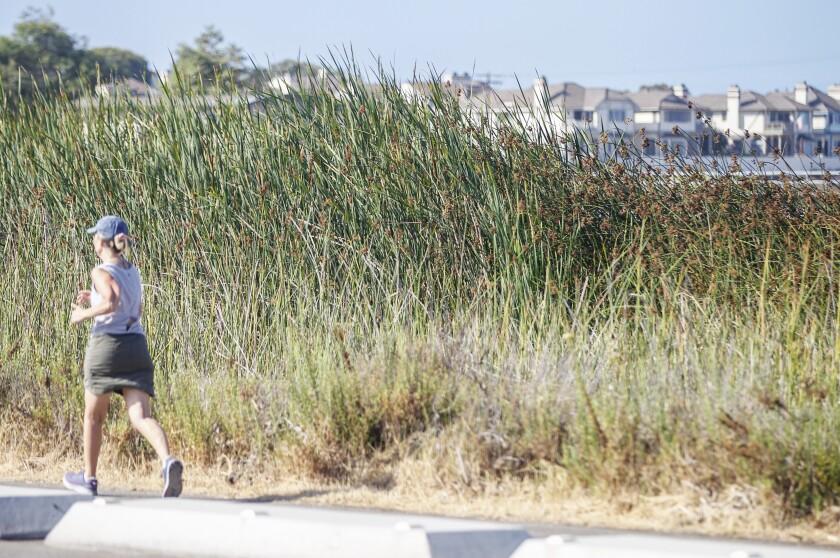 A runner passes by the Buena Vista Audubon Nature Center.