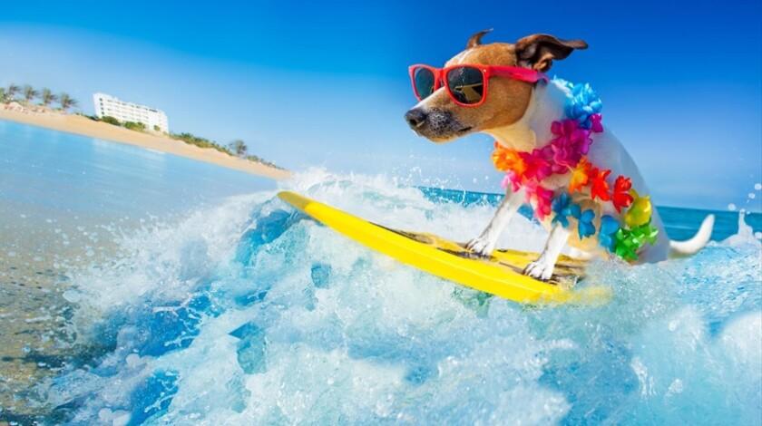 Splash into summer with La Jolla Light's June-August calendar of events