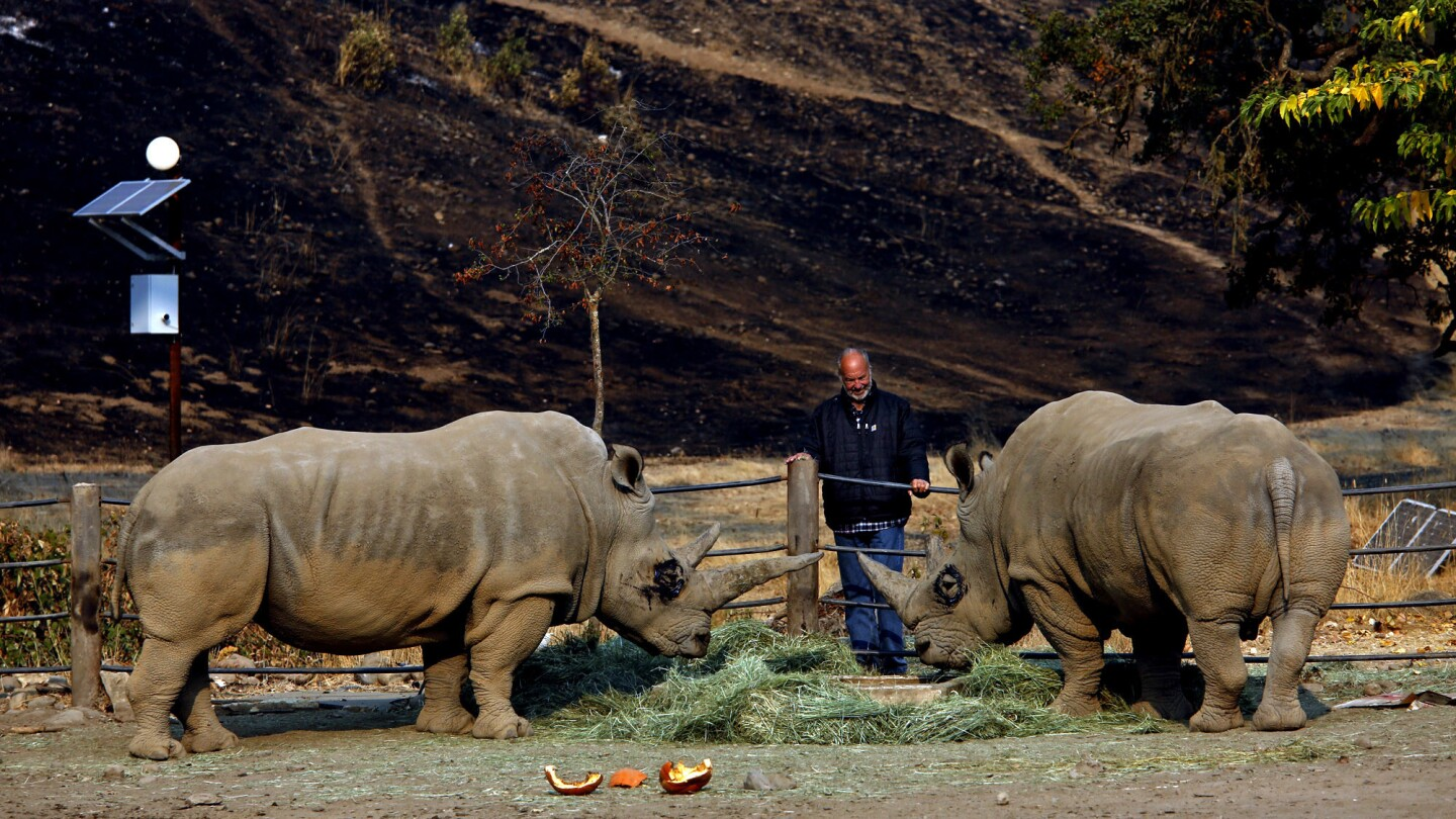 After fires razed their homes, wildlife park workers find relief caring for animals