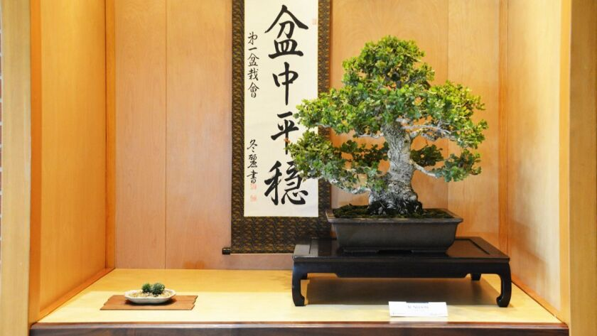 The gardening art of bonsai: Gently guiding growth