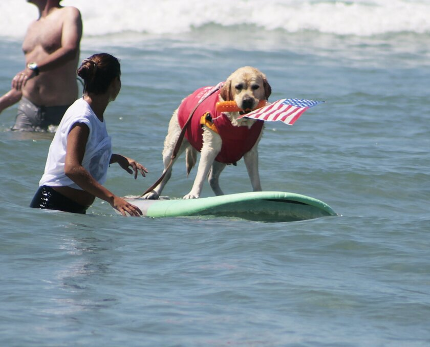 Surf Dog Patriotic Fred