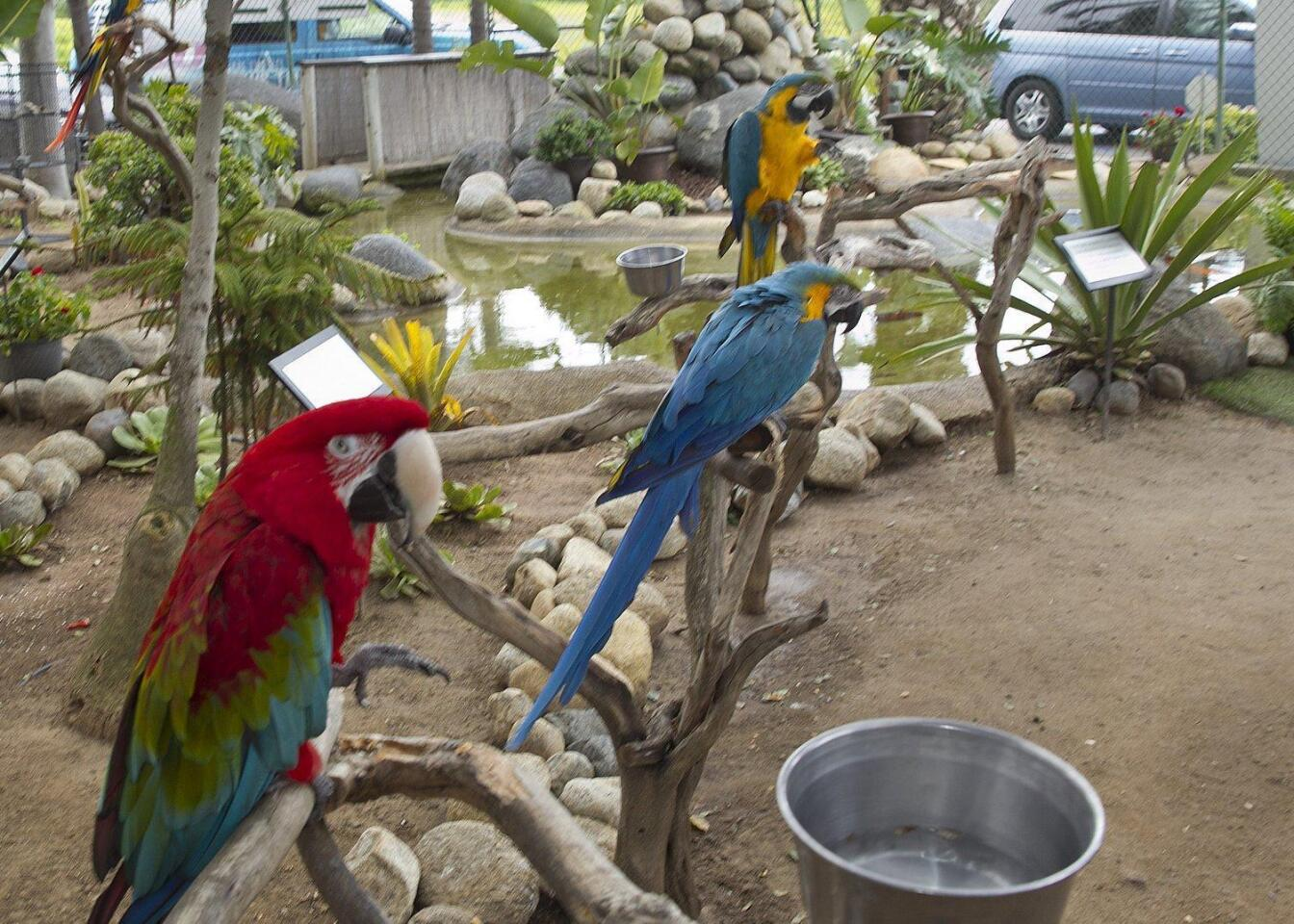 The Macaws greet visitors at the entrance