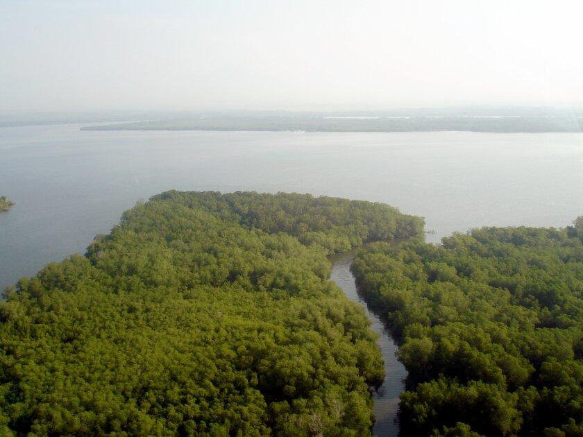 Hawkbill turtle habitat in Gulf of Fonseca, Honduras.