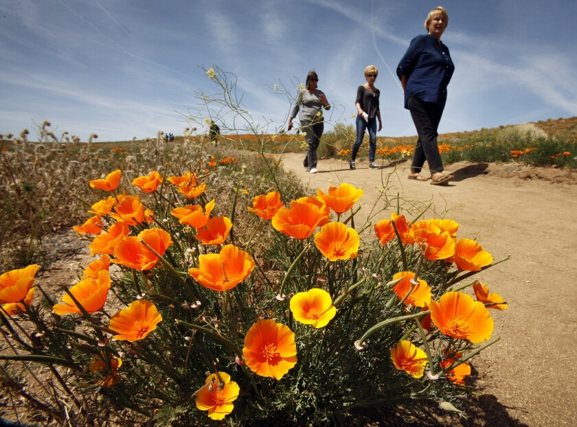 """""""Walkers had more thoughts, but they also had a higher density of creative thoughts than sitters,"""" said one researcher. Above, hikers in the Antelope Valley Poppy Preserve near Lancaster."""