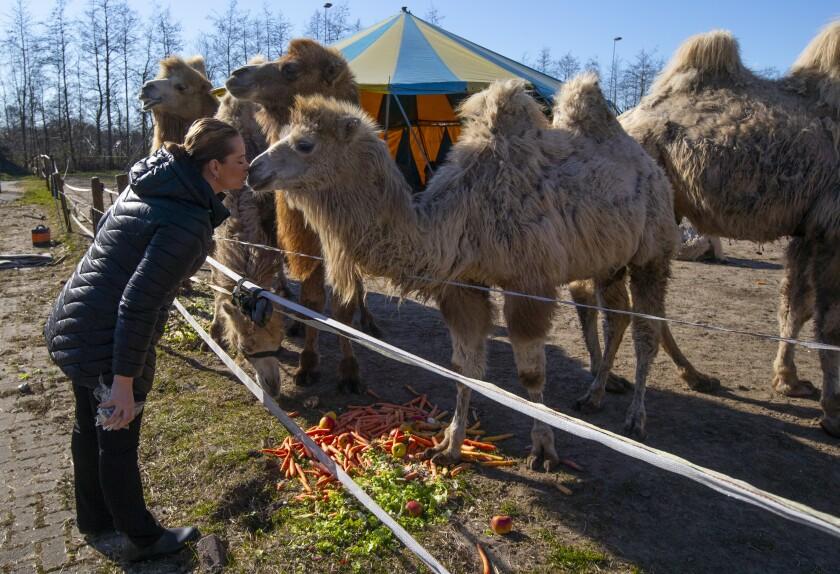 Virus Outbreak Netherlands Circus Photo Gallery