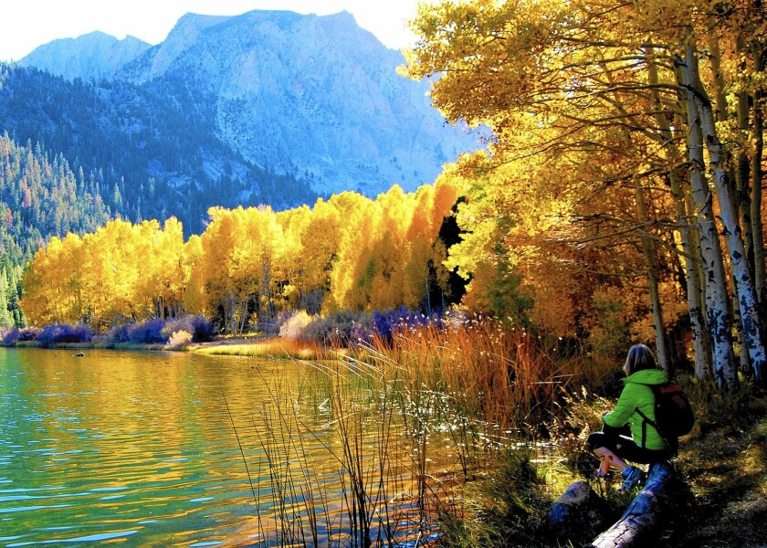 Chris Erskine dreams of fall with the help of a screen-saver