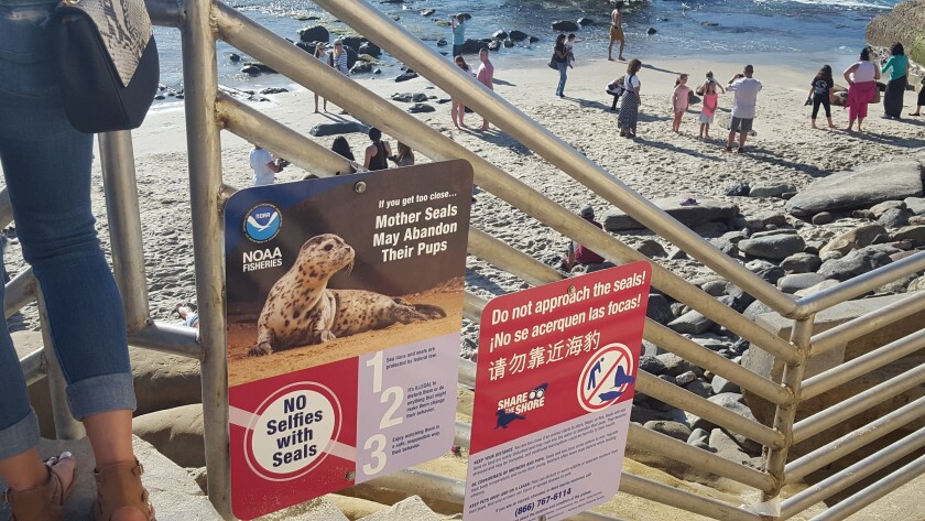 New signs posted at South Casa Beach next to La Jolla's Children's Pool warn people not to approach or get 'too close' to the harbor seals there.